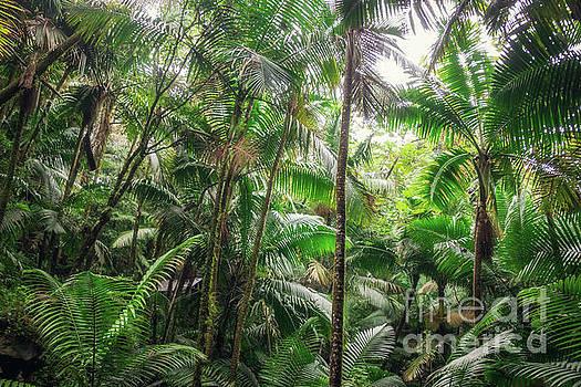 Tropical Jungle by Joan McCool