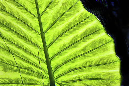 Tropical Leaf by Grace Dillon