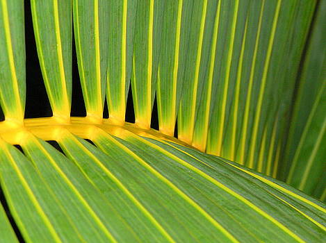 Tropical leaves by Heather Bethke
