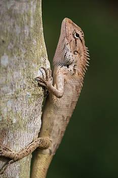 Tropical Lizard  by Maximilian Wollrab