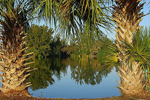 Tropical nature in Florida by Zalman Latzkovich