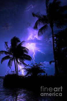 Tropical Nights by Quinn Sedam
