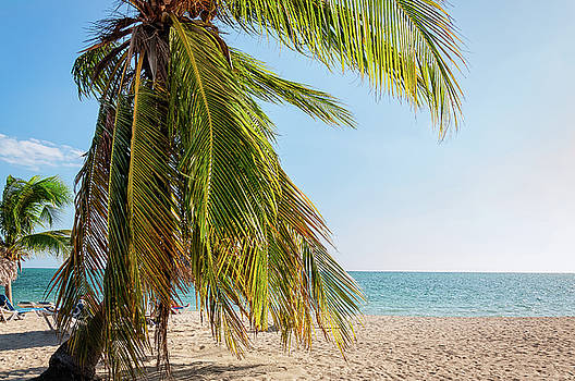 Tropical palm tree at Ancon Beach in Cuba by Daniela Constantinescu