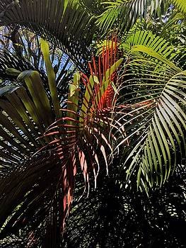 Tropical Palms by Kay Gilley