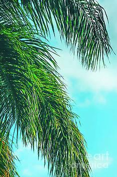 Tropical Palms Maui Hawaii by Sharon Mau