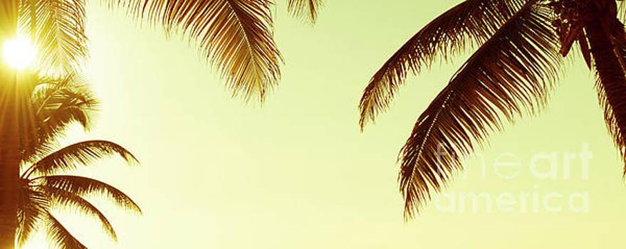 Tim Hester - Tropical Palmtree Vintage Banner