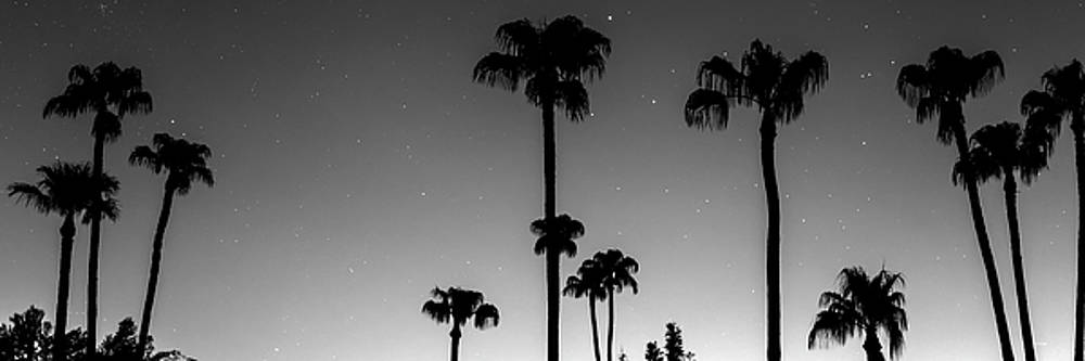 Tropical Peaceful Starry Night Panorama in Black and White by James BO Insogna