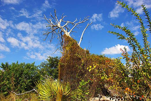 Tropical plants in a preserve in Florida by Zalman Latzkovich