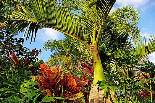 Tropical plants by Zalman Latzkovich