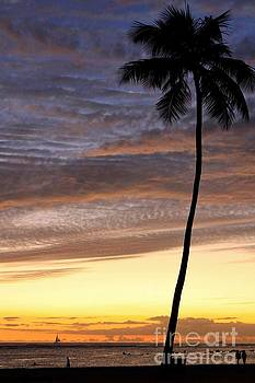 Tropical Silhouette by DJ Florek