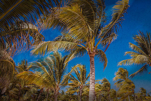 Tropical by Sonia Conforti