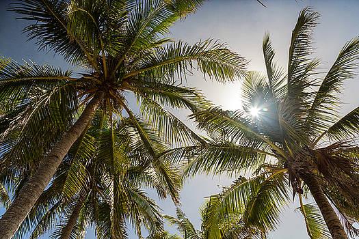 James BO Insogna - Tropical Sun