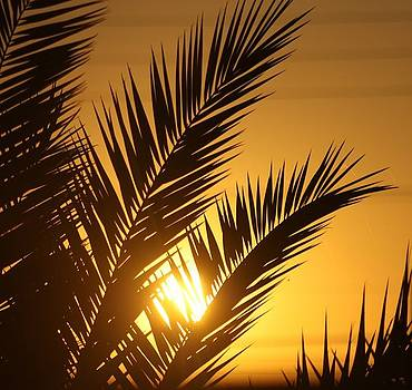 Tropical Sunrise by JoAnn Tavani