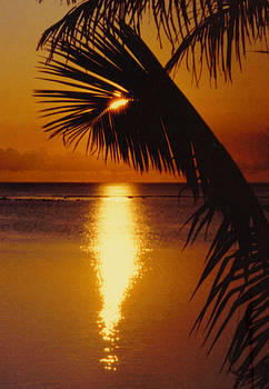 Tropical Sunset by Dina Holland