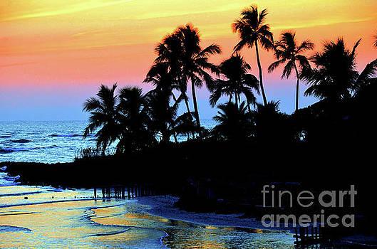Tropical  sunset silouhette by Elaine Manley