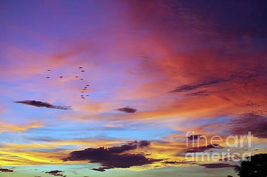 Tropical North Queensland Sunset Splendor  by Kerryn Madsen-Pietsch