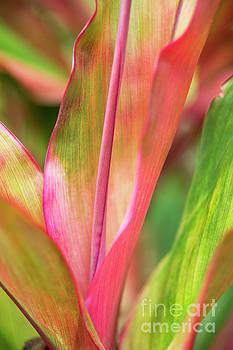 Charmian Vistaunet - Tropical Ti-Leaves