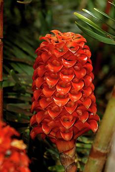 Tropical Tiers by Alynne Landers