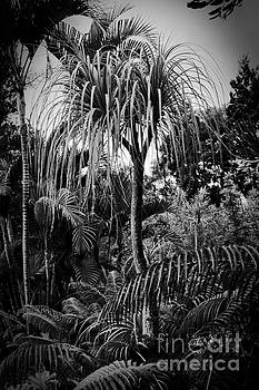 Tropical Trees by Sharon Mau