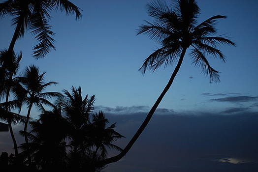 Tropical Twilight by Peter  McIntosh