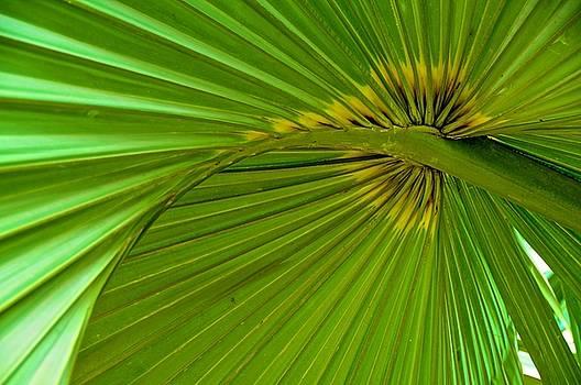 Tropical Umbrella by Mansour Zadrafie