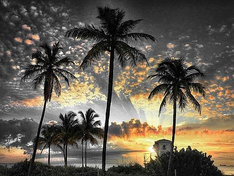 Tropically, black and gold. by Andrew Royston
