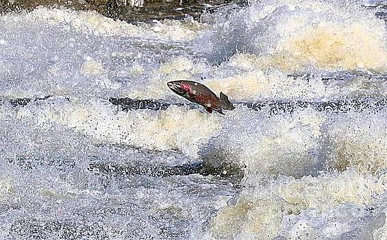 Trout by Robert Pearson