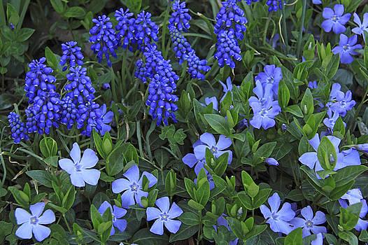 True Blue by Kelly S Andrews