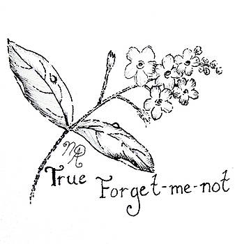 True Forget-me-not by Nicole Angell