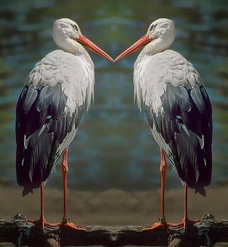 Nikolyn McDonald - True Love - Storks