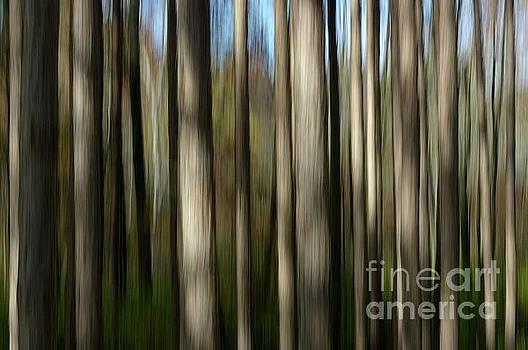 Trunks Abstract by Randy Pollard
