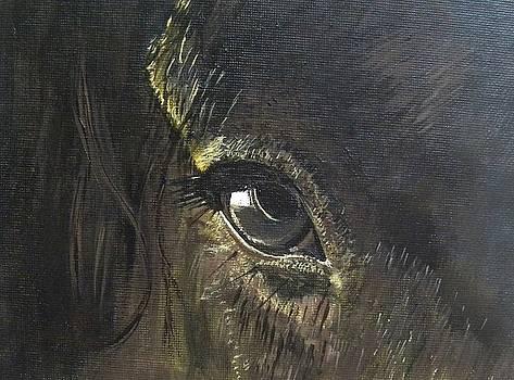 Trusting Eye by Denise Hills