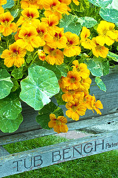 Sandra Foster - Tubbed Nasturtiums On Bench