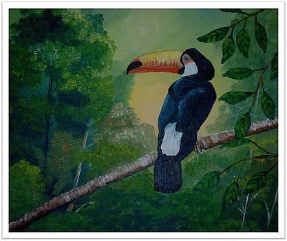 Tucan in a branch by Jean Pierre Bergoeing