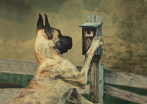 Tucker and the Birdhouse by Fran J Scott