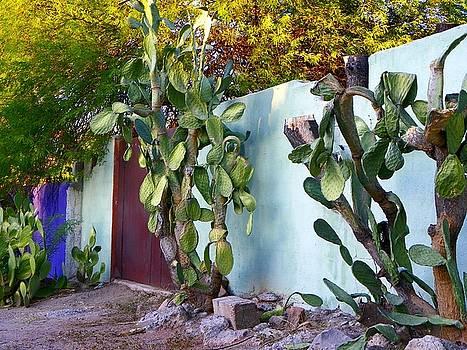 Tucson Barrio by Elma Sulek