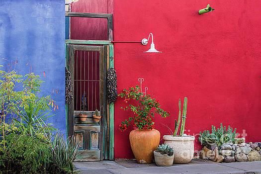 Tucson by Gary Whitton