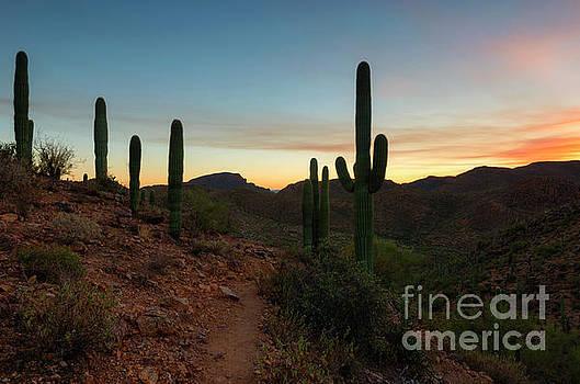 Mike Dawson - Tucson Mountain Sunset