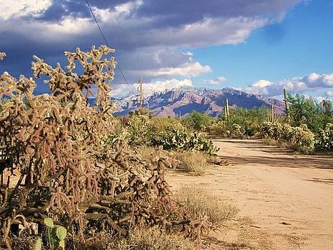 Kathleen Heese - Tucson Winter Storm