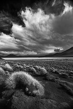 Tuft BW by Aaron Bedell