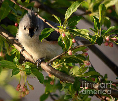 Tufted and Fluffed for Spring by Nava Thompson