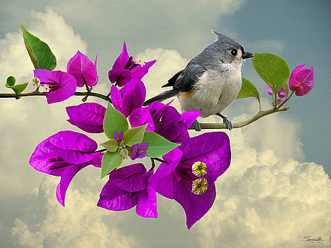 Tufted Titmouse and Purple Bougainvillea by Spadecaller