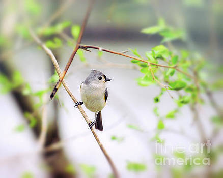 Tufted Titmouse In Spring Green by Kerri Farley