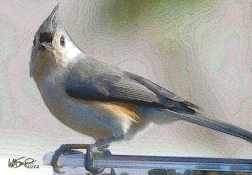 Tufted Titmouse by William Sargent