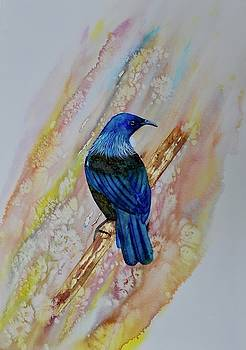Tui on golden bough by Carolyn Judge