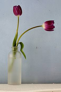 Tulip 2 by Emma Manners