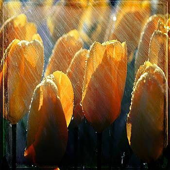 Ingrid Smith-Johnsen - Tulip 48