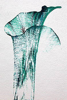Tulip by Akshatha Karthik