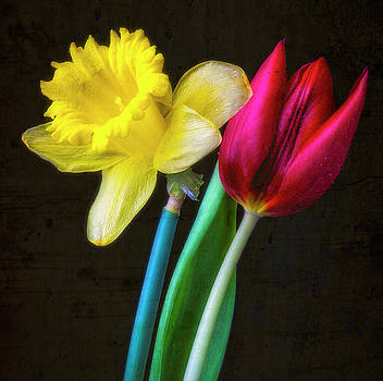 Tulip And Daffodil Together by Garry Gay