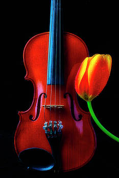 Tulip And Small Violin by Garry Gay